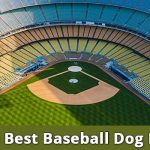 The 10 Best Baseball Dog Names