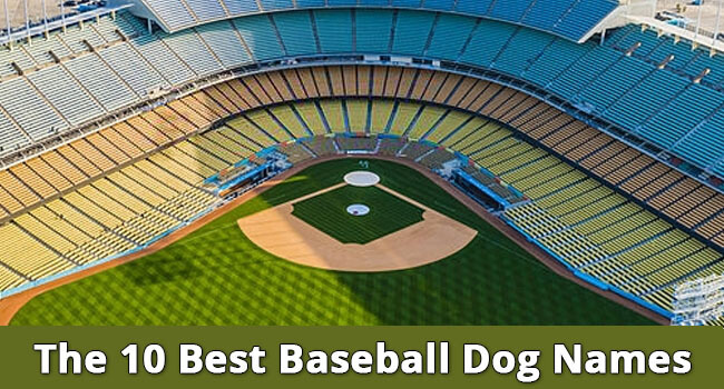 The-10-Best-Baseball-Dog-Names-of-Featureed-Image-1
